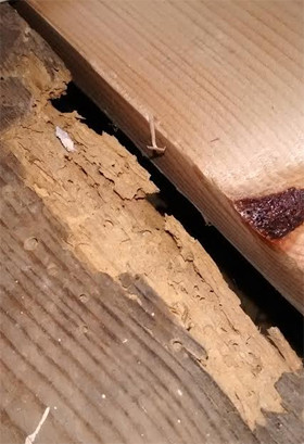 Woodworm And How To Deal With Them